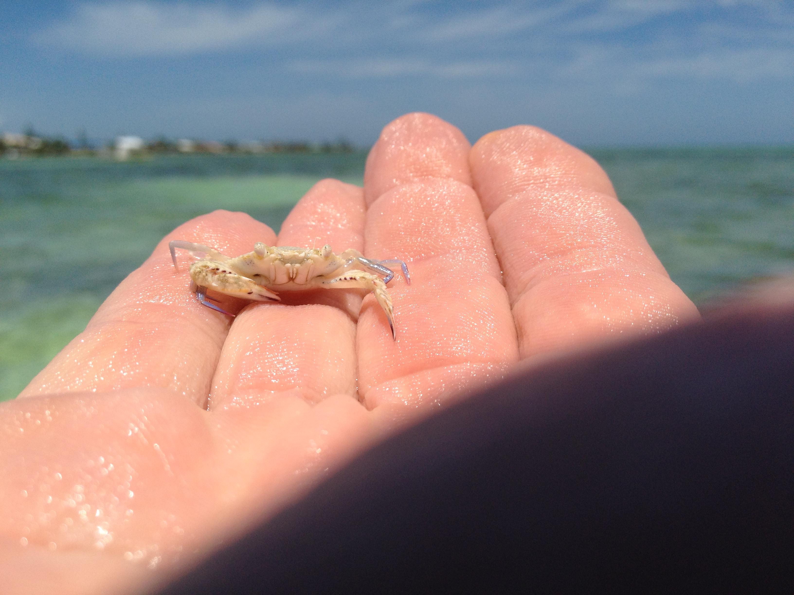 Florida Keys Kite boarding Eco Tour