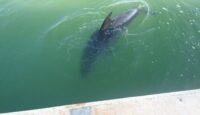 Once in a lifetime Dolphin encounter.!